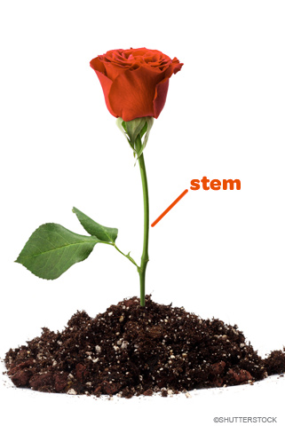 STEM_Education_like_a_Rose