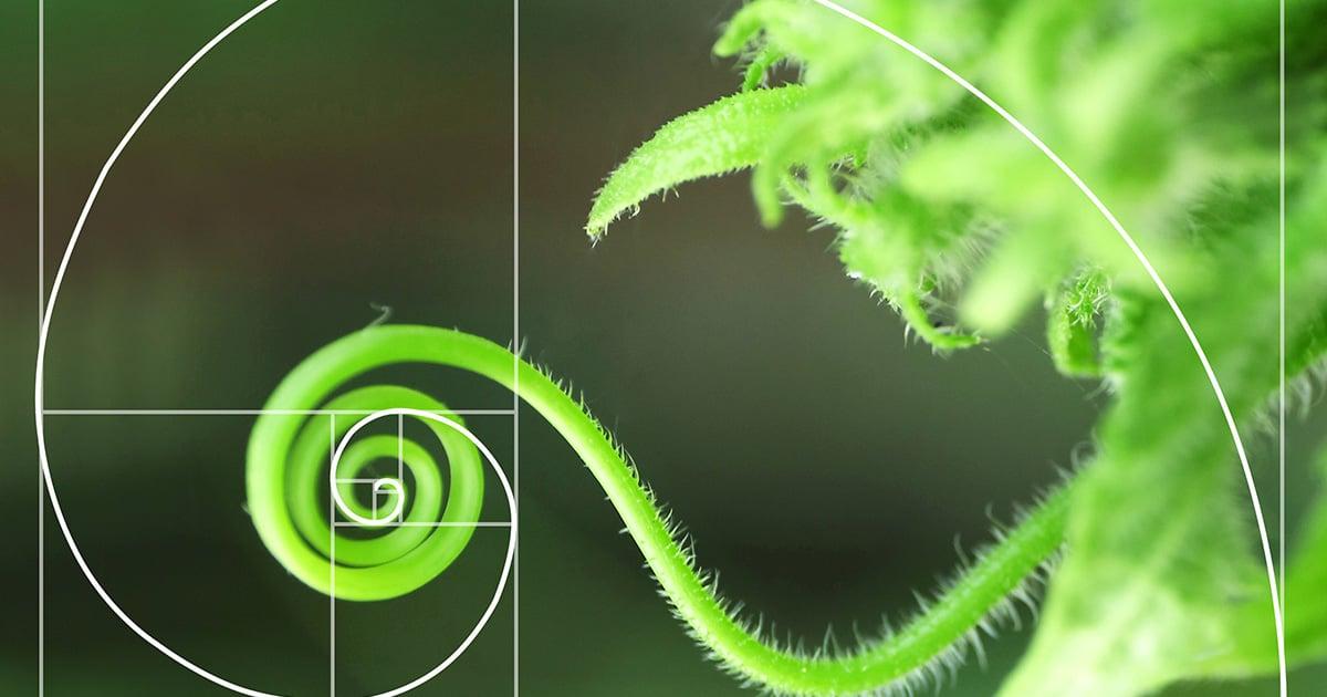 Math Nature