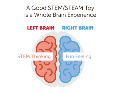 STEM-toy-Brain